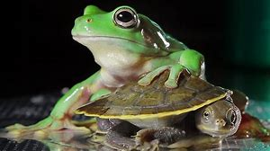 frog and a turtle